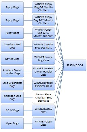 dog show process