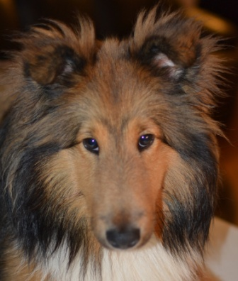 step by step dog grooming instructions