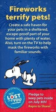 Fireworks terrify pets
