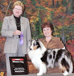 dog show competition
