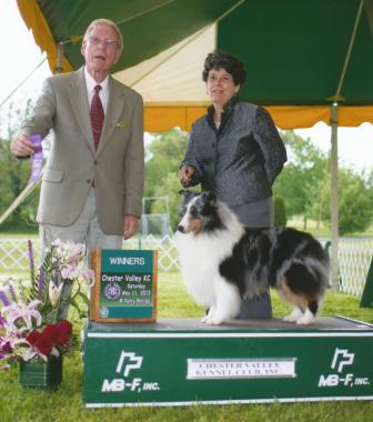 sheltie breed standard