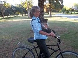 tricolor sheltie on bike