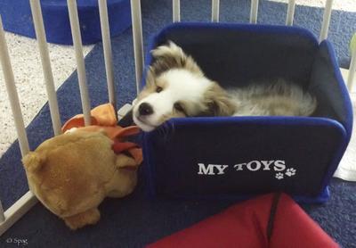 My favorite place to sleep!