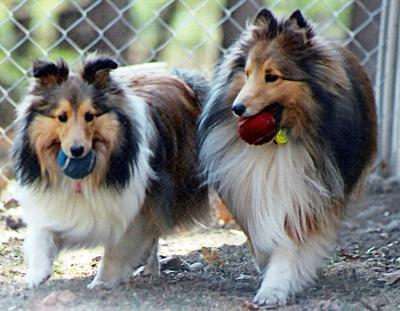 Ellie and Poohbear with their tennis balls
