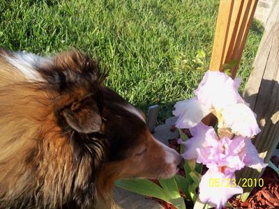 Stop & smell the flowers along the way.