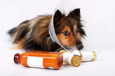 dog care advice for sick dog
