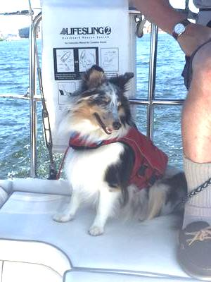 Pepper's first sailing experience. She was a good crew.