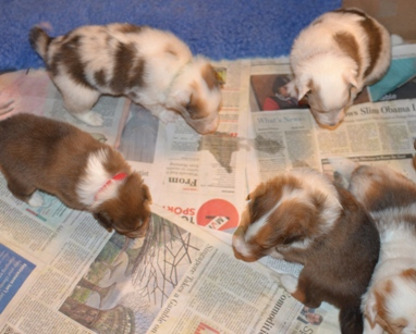 puppies in a litter
