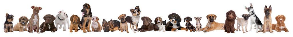 dog breeding created many breeds