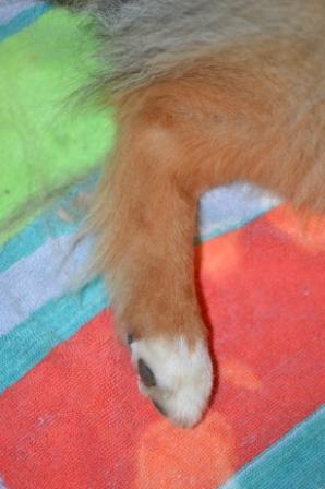 Dog Brush Cut Mat S