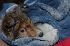 dog parasites removed with bathing